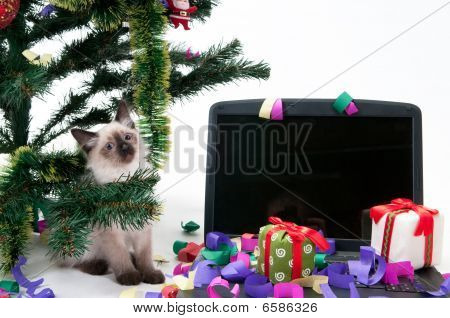 Kitten and laptop under the Christmas tree