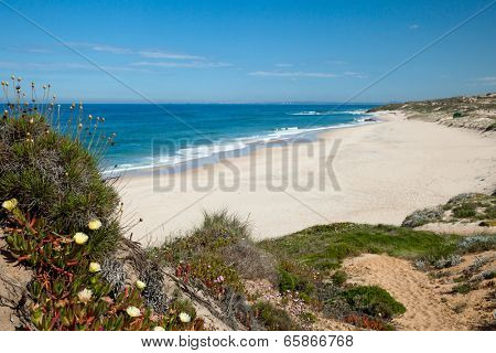deserted beach in Portugal with plants and flowers.Focus on flowers