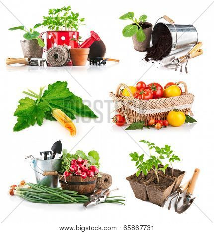 Set seedlings and harvest vegetable. Isolated on white background