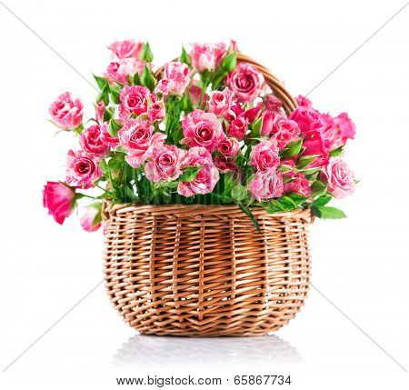 Bunch pink roses in wicker basket. Isolated on white background
