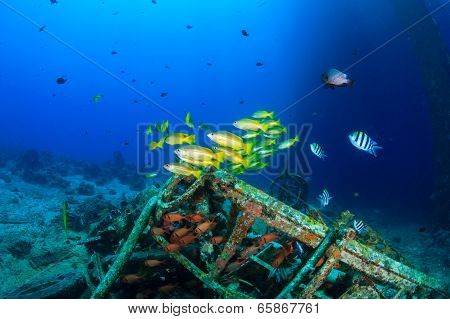Tropical fish near underwater wreckage