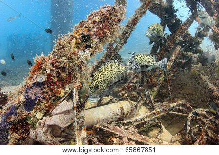 Tropical fish and glassfish underwater