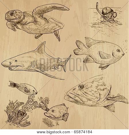 Underwater, Sea Life (vector Set No.1) - Hand Drawn
