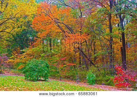 Autumn palette.