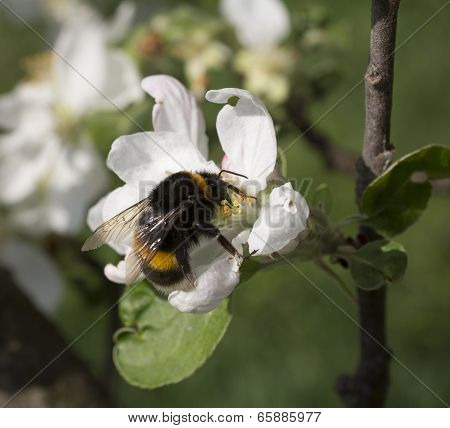Bumblebee Works