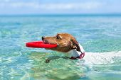 stock photo of frisbee  - dog catching a red frisbee and swimming in water - JPG