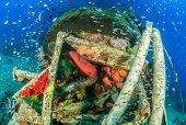 picture of grouper  - Tropical fish and Grouper around a shipwreck underwater - JPG