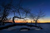 picture of dnepropetrovsk  - Tree of frozen river in winter of Dnepropetrovsk Ukraine - JPG
