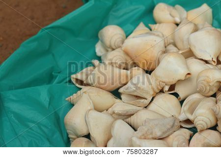 White Conch Shell Laying On A Green Background.