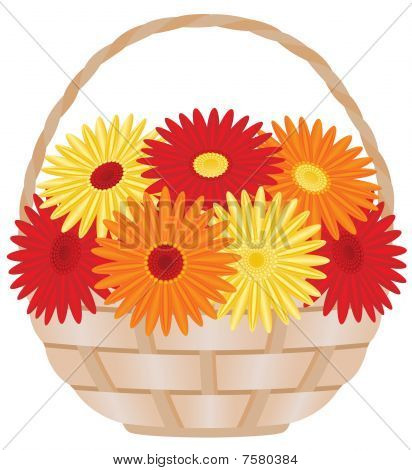 Gerbera daisies in basket