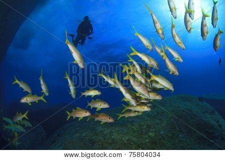 School of fish underwater and scuba divers