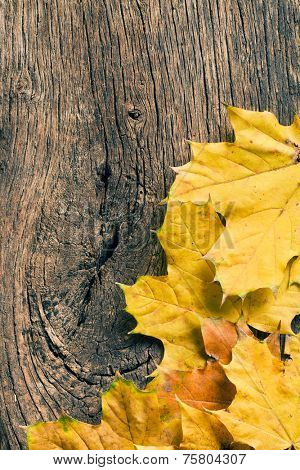 the autumn leaves over wooden background with copy space