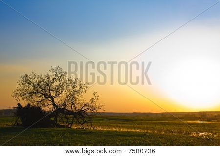 Oak park at sunset