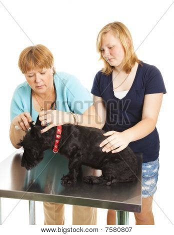 Female Vet Examining Patient