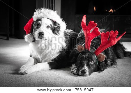 Christmas Card Dogs