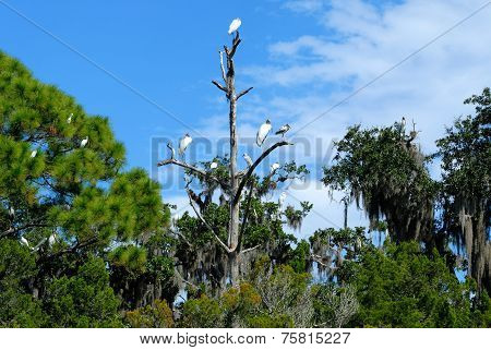 Tropical Birds in the Wild