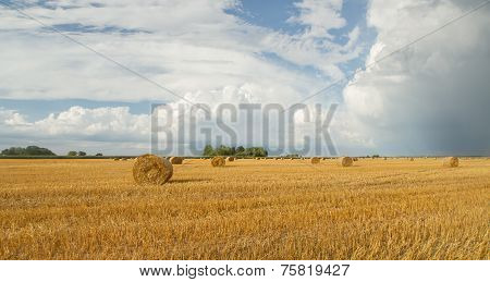 Hay Rolls In Blue Sky