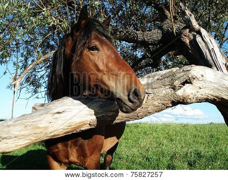 A horse with a tree