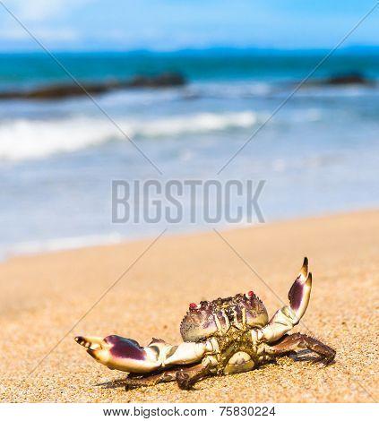 On the Shore Alien Creature
