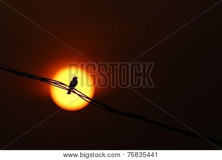 Bird Sitting On Wire At Sunset