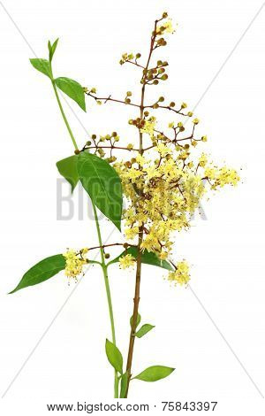 Henna Flower With Leeaves