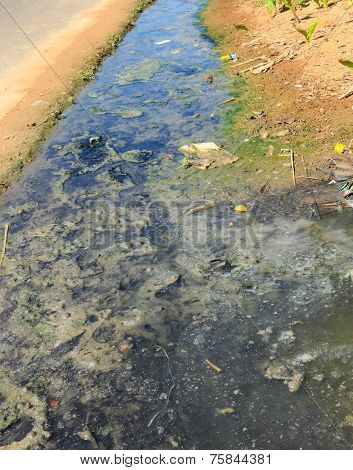 Sewage Sediment