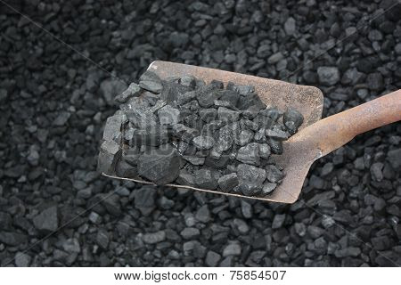 Loading Shovel Coal