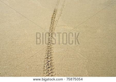 Bicycle  Trace Tracks On Sand