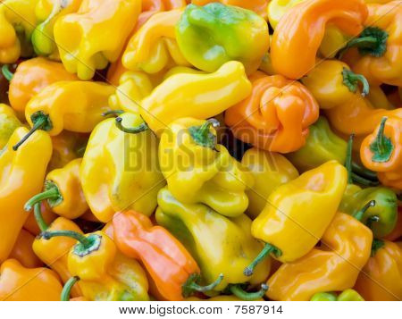 Sweet Peppers of Provence