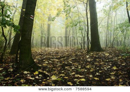 autumnal still life in deciduous temperate forest