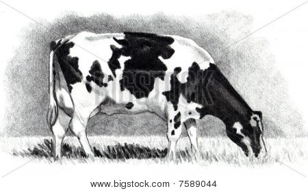 Pencil Drawing of a Cow Grazing