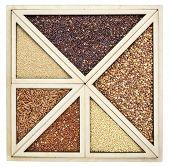 image of millet  - variety of gluten free grains  - JPG