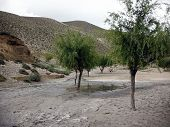 foto of mustang  - A small oasis in the cracked and barren landscape of the Annapurna Himalayas in Mustang Nepal during monsoon - JPG