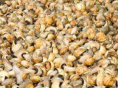 picture of escargot  - Escargot or Snails in a market - JPG