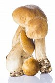 picture of boletus edulis  - Fresh boletus edulis isolated on a white background - JPG