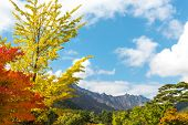picture of seoraksan  - Seorak fall view in the morning light - JPG