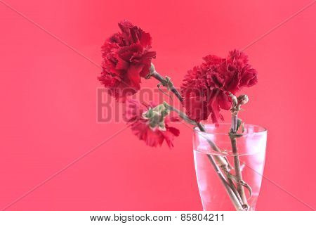 Red Carnations In Vase On A Red Background, Selective Focus.