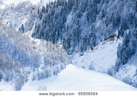 Deciduous and coniferous forest on the snowy slopes