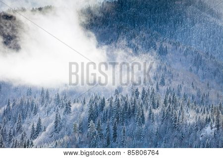 The wooded slopes of the mountains in snow fog