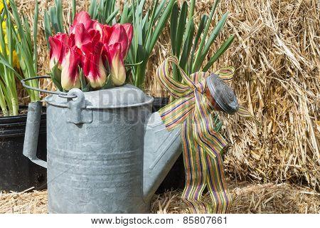 Spring Still Life With Straw