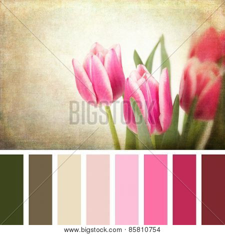 A closeup of pink tulips, with textured retro style processing, in a colour palette with complimentary colour swatches