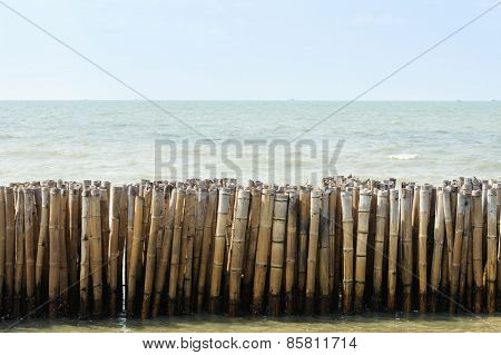 Old Bamboo In Sea
