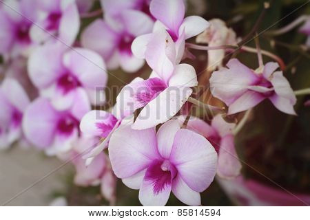 Orchid Flowers With The Nature