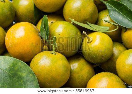 Kumquat (clementine)