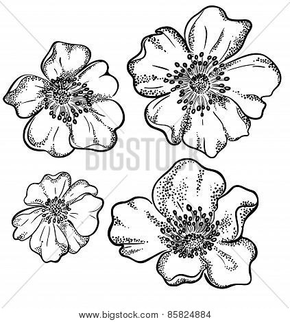 Vector Contour Flowers Illustration.