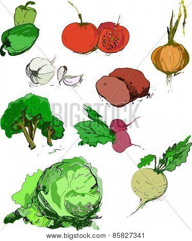 Organic vegetables vector illustration
