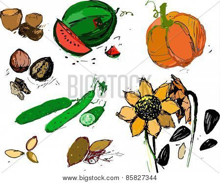 Organic food vector illustration in color