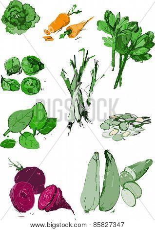 Organic vegetables vector illustration in color