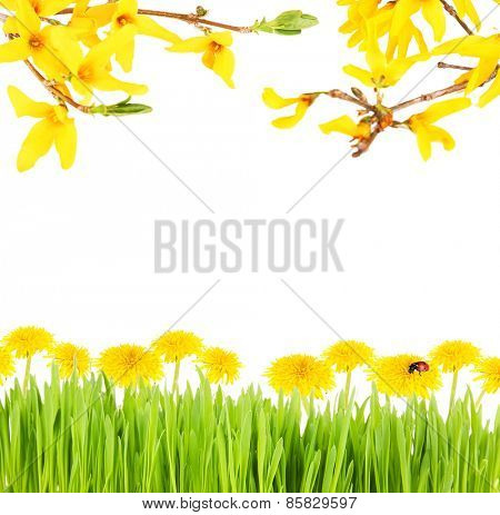 Beautiful spring background with blooming twigs, green grass and flowers