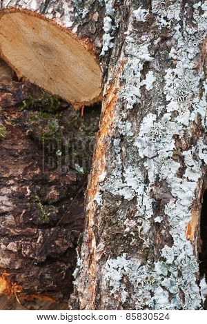 Firewood 3